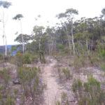 BLUE TRAILS 21:    Nellies Glen, Katoomba