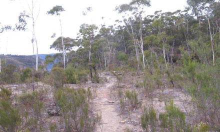 BLUE TRAIL 21:    Nellies Glen, Katoomba