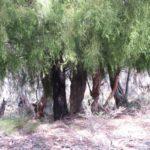 Blue Trail 48:  BRACEY'S LOOKOUT, Hassans Walls Plateau