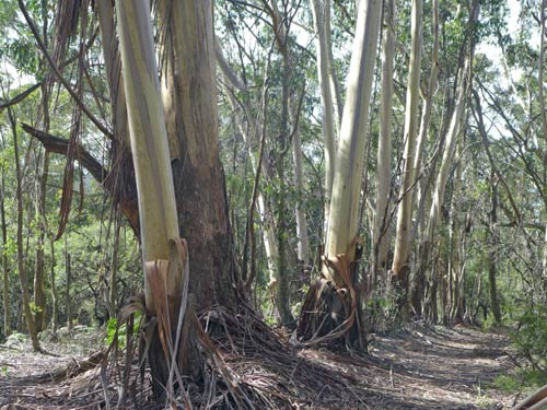 BLUE TRAIL 2:     Edgar Church's gravesite and Pulpit Hill, Katoomba