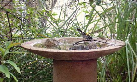 The Birdbath